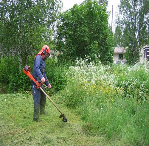 Resultado de imagen de imagenes jardineros